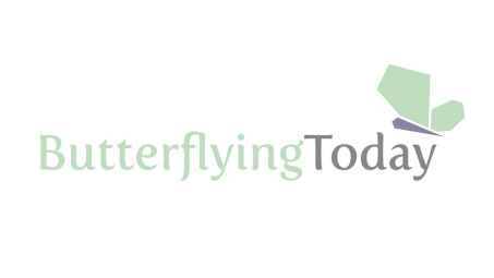 butterflying_900_506px